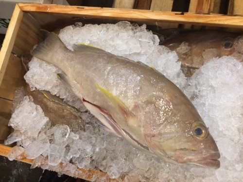 Grouper: Yellowfin