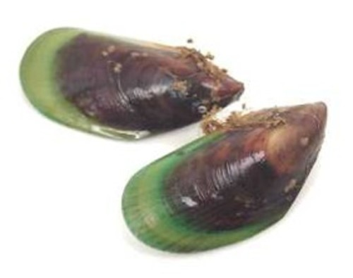 New Zealand Green Lip Mussels