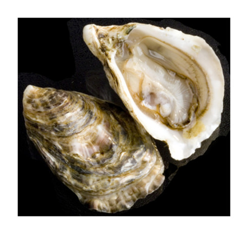 Oyster (Guide)