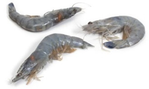 Shrimp: Blue Prawns