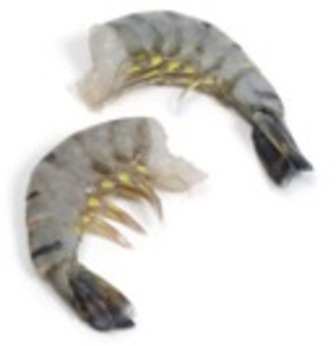 Shrimp: Tiger