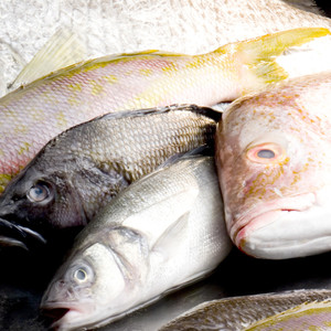Domestic & Imported Fin Fish