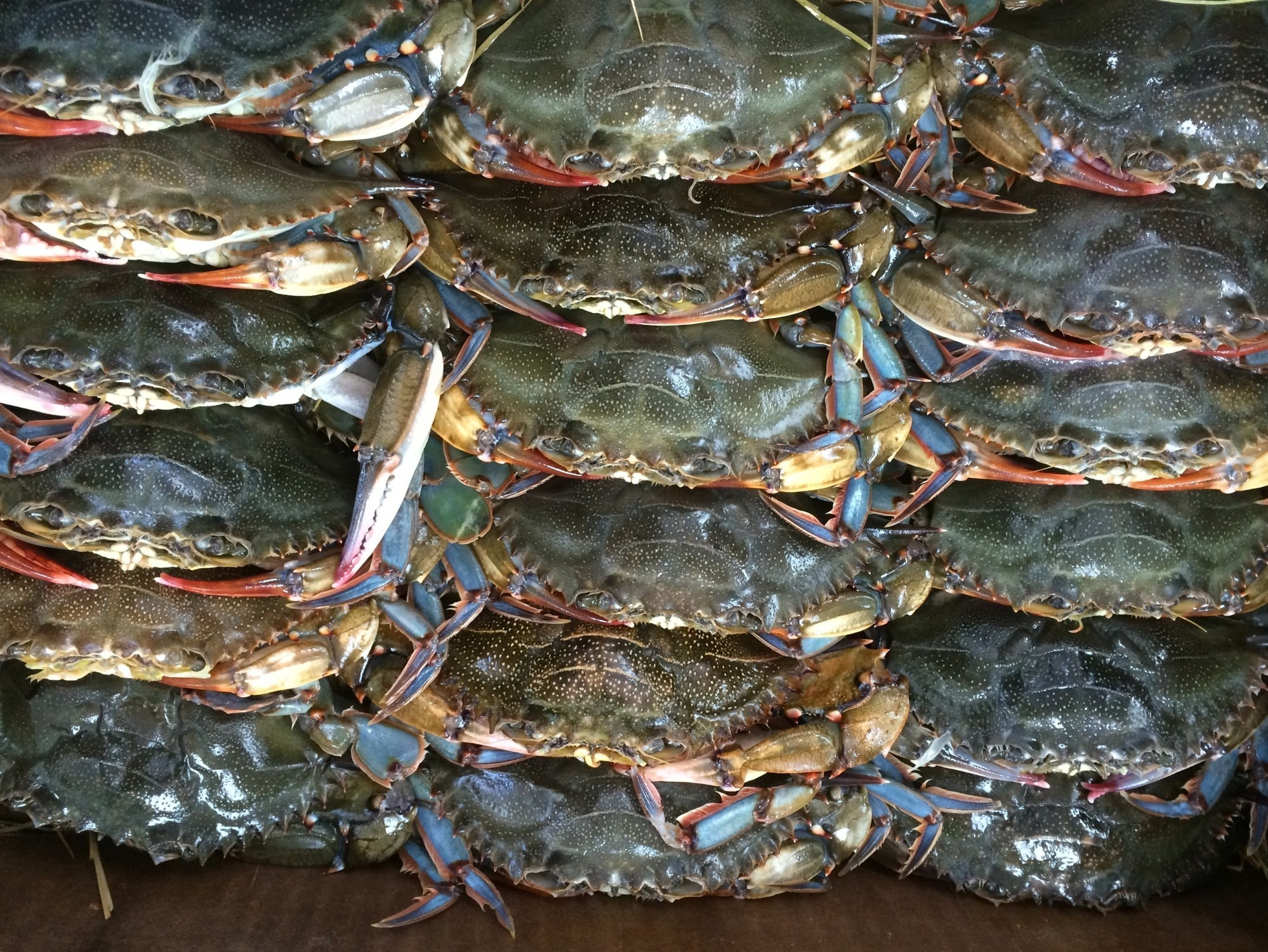 Crab | Inland Seafood