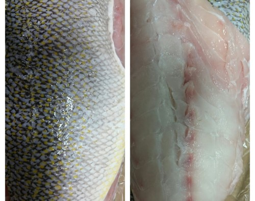 Tilefish, golden
