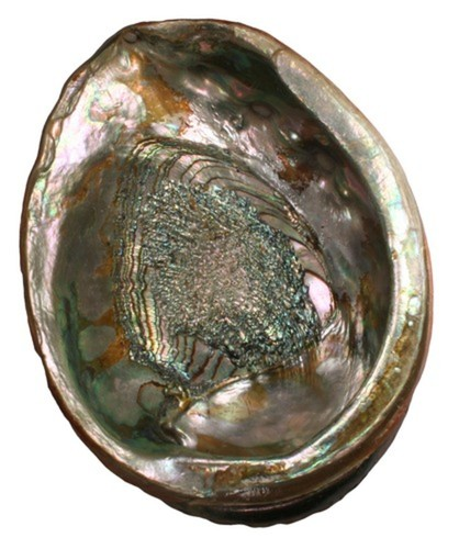 Abalone (Farmed)
