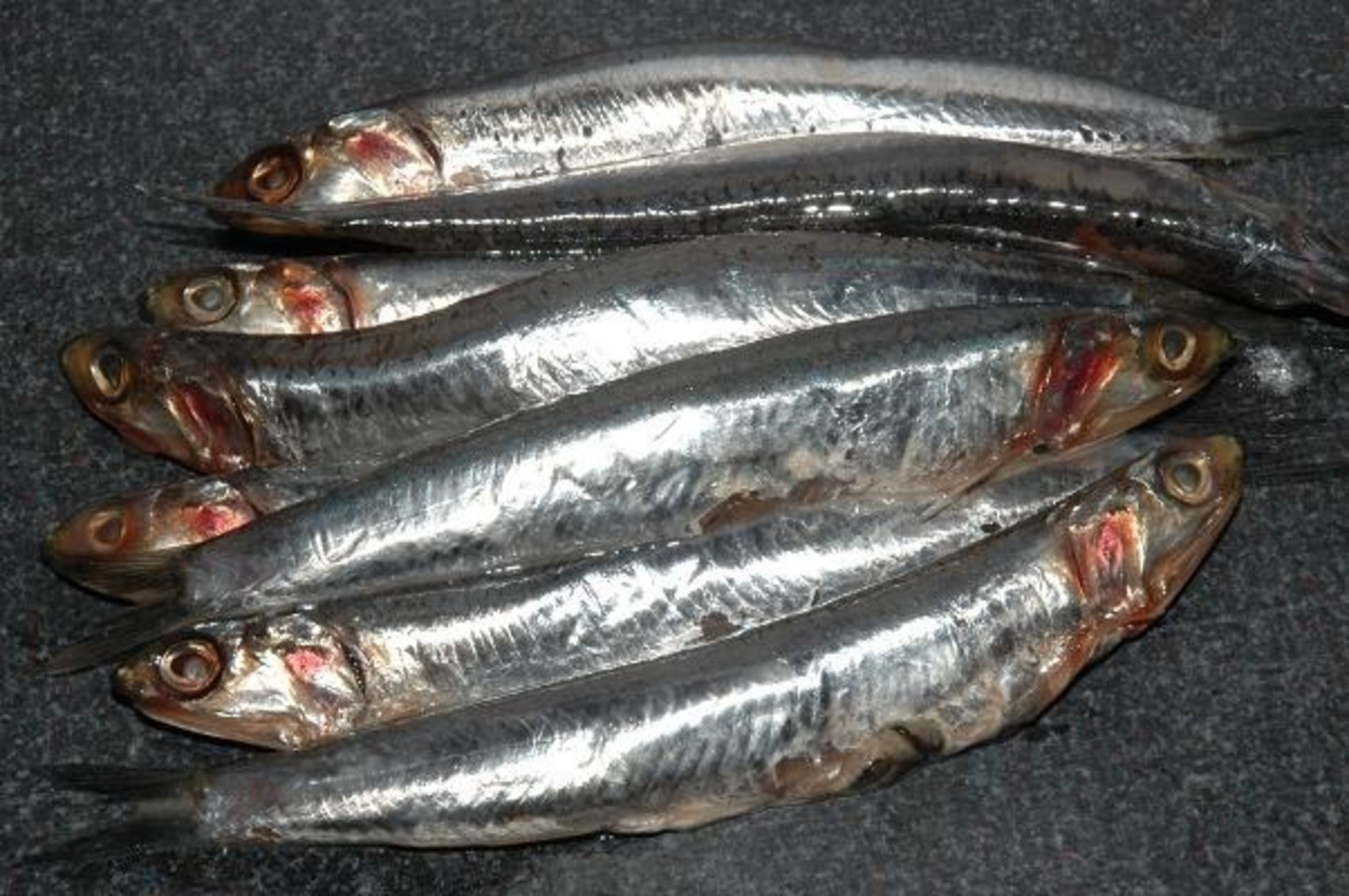 Anchovies | Anchovies Inland Seafood