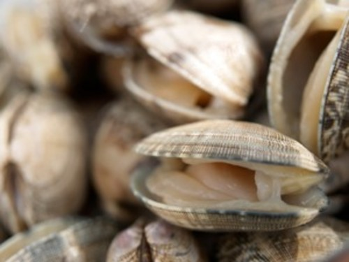 Clams: An Overview