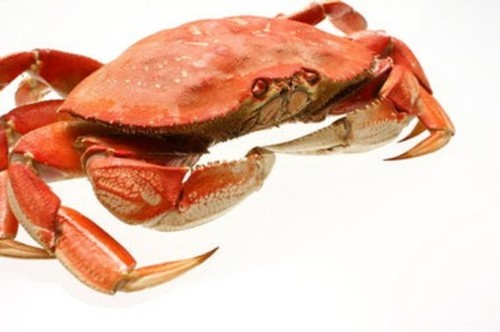 Crab: Dungeness