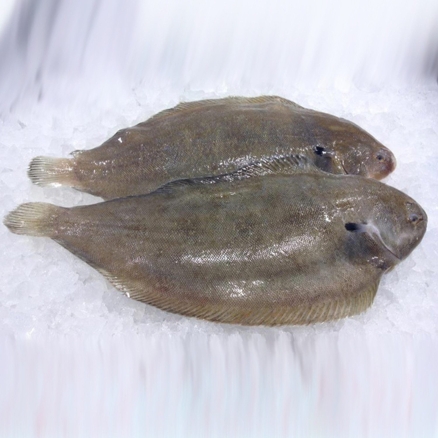 Dover sole inland seafood for Dover sole fish